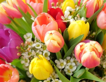 Colorful-flowers-000087781667_Full.jpg